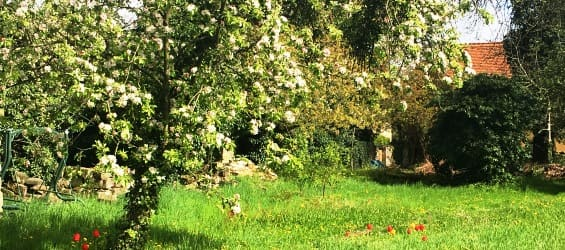 Plantagengut Hosterwitz Impressionen Garten